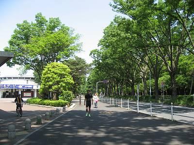 東京競馬場前の並木道