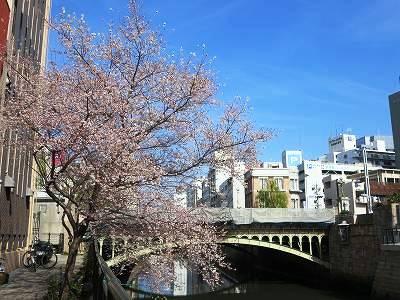 納屋橋の四季桜2