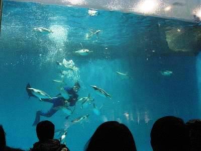 水中を飛ぶペンギンたち