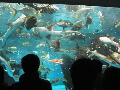 エサやりタイムで泳ぎ回る魚たち