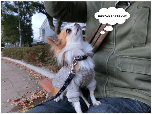CIMG0978_convert_20121125173152.jpg
