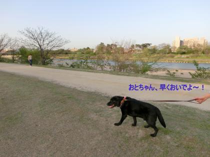 CIMG1175_convert_20120430004059.jpg