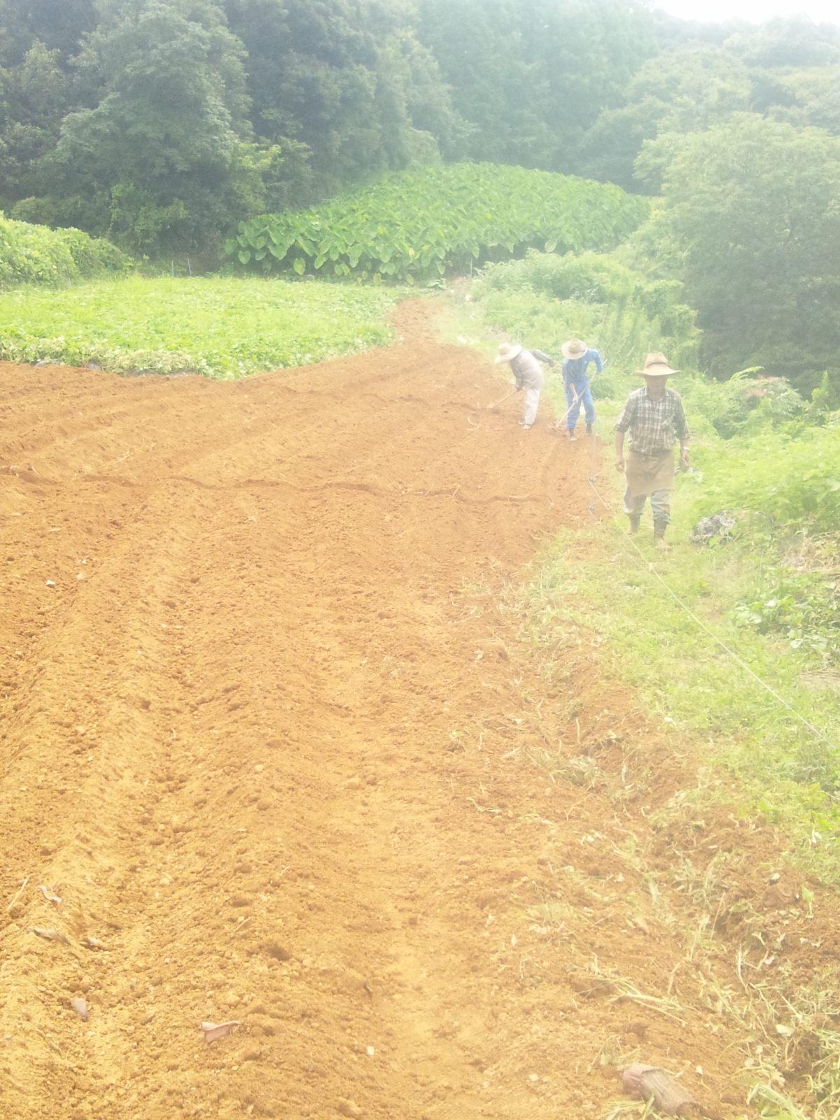 管理機で土をふせて畝をならします