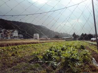 2013_01_02_京都_13