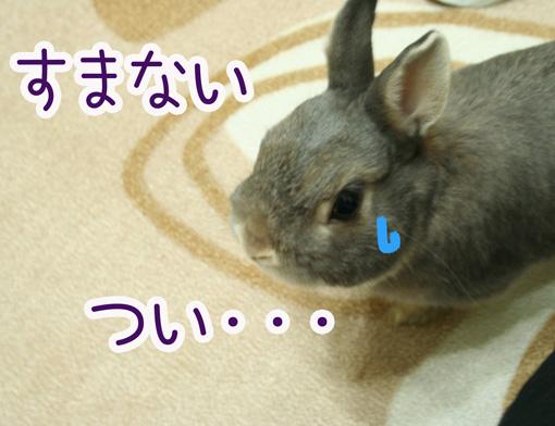 きのこ団10