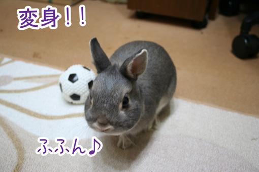 きのこ団3