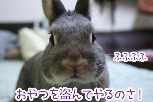 きのこ団4