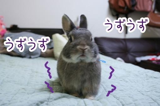 きのこ団6