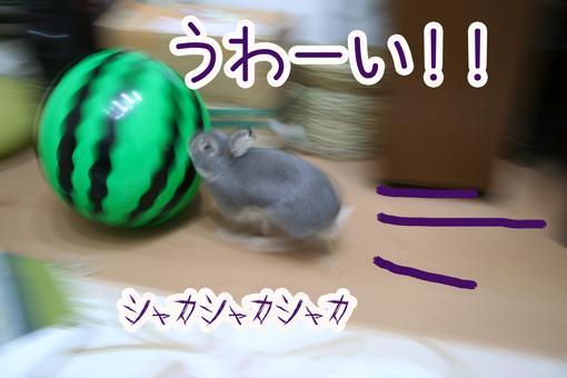 きのこ団7