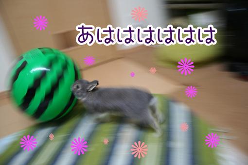 きのこ団8