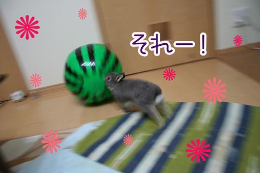きのこ団9