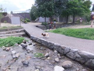 公園の中の川