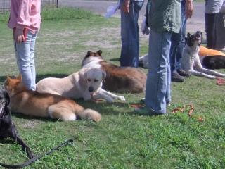 大型犬ダウン