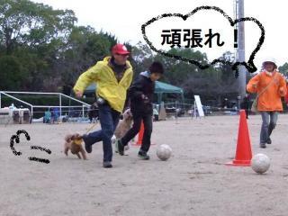 ボールけり