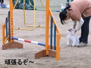 白馬ちゃん