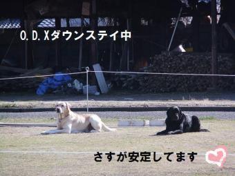 ODXダウンステイ