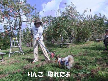 りんごゲット