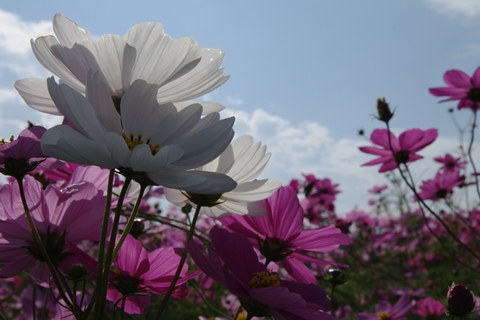 kousumosu2-201410251.jpg