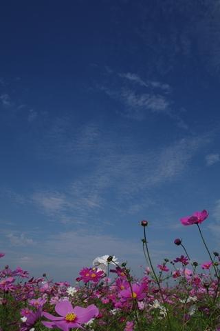 kousumosu5-201410251.jpg