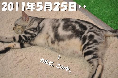 0002_20120527200817.jpg