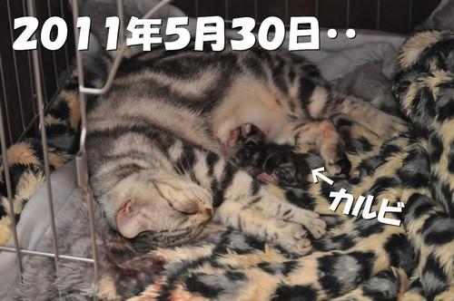 0003_20120527200817.jpg