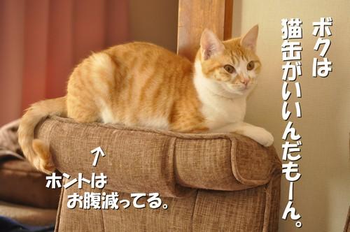 004_20120528095606.jpg