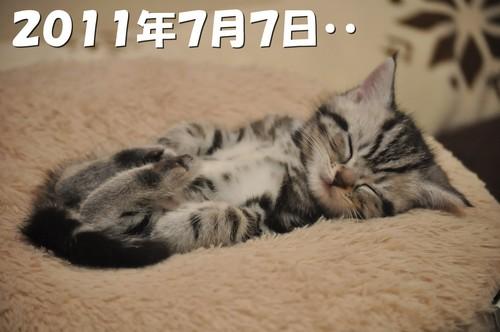 005_20120527201019.jpg