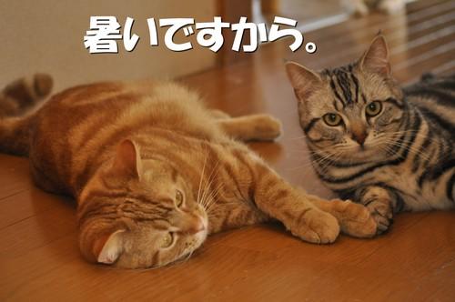 006_20120502103740.jpg