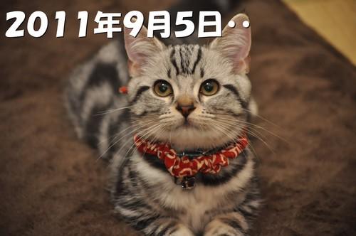 006_20120527201019.jpg