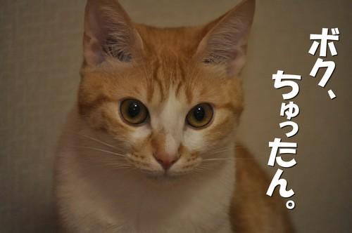 006_20120601153031.jpg