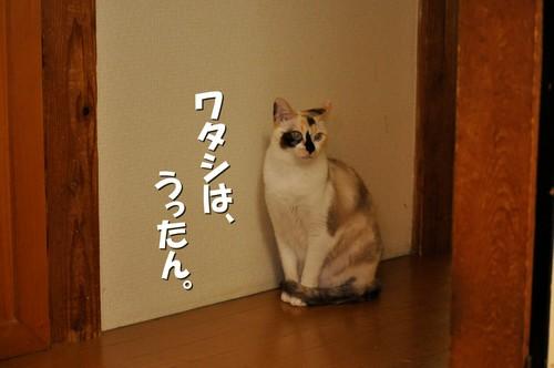 007_20120601153128.jpg