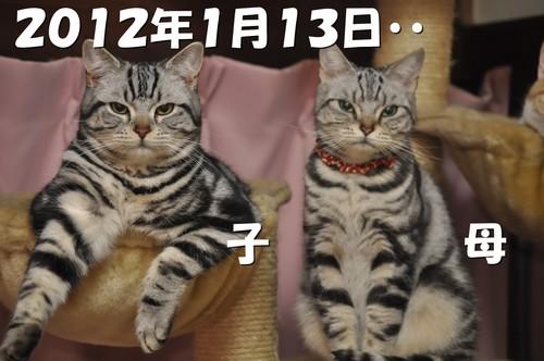 008_20120527201017.jpg