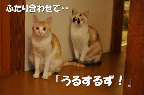 008_20120601153127.jpg