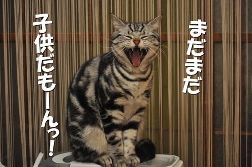 010_20120527201046.jpg