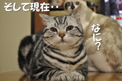 011_20120527201046.jpg