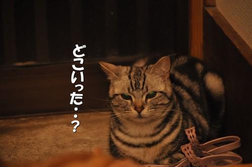 10_20120524161308.jpg