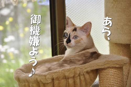 11_20120524161307.jpg