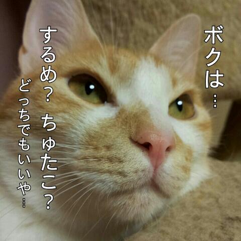 rps20121213_090051.jpg