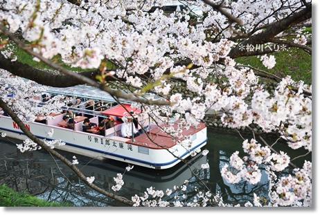 松川べり2012 101