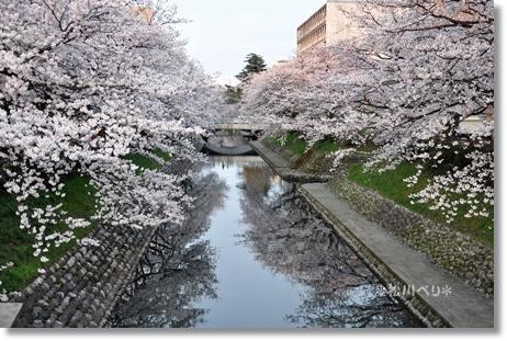 松川べり2012 080