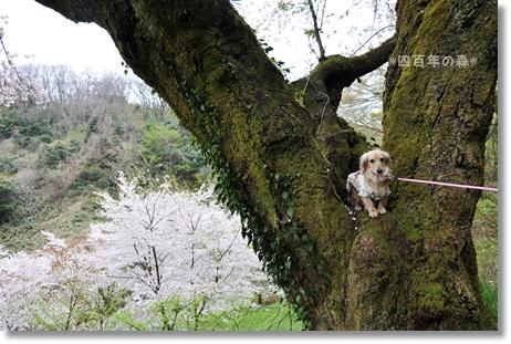 四百年の森2012 140