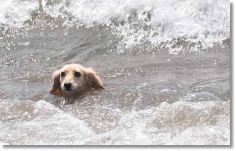 海水浴 039