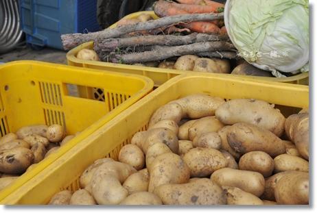 野菜の収穫 195