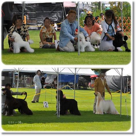 金沢全犬種グラブ展2-1
