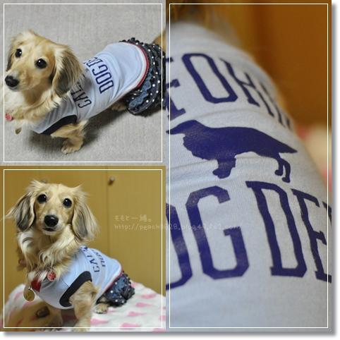 DOG DEPT 3-1