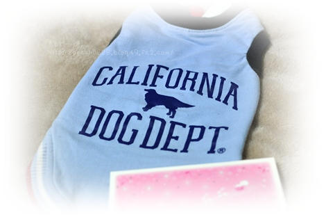 DOG DEPT 077