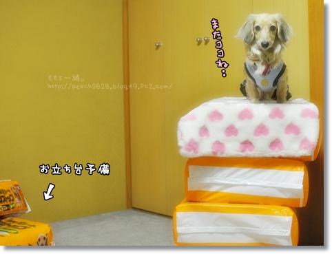 DOG DEPT 069