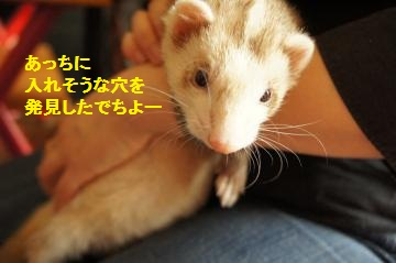 DSC01952_convert_20121031155414.jpg