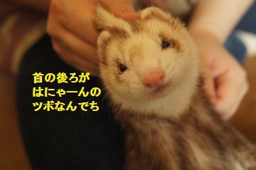DSC01957_convert_20121031160308.jpg