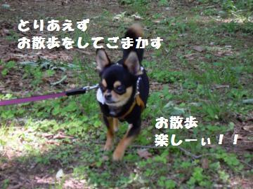 DSCN1139_convert_20120514212618.jpg